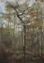 Portraits d'arbres -Caligraphie-